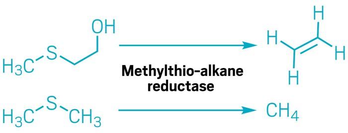Etilen Oluşturmak için Oksijene İhtiyacı Olmayan Enzim