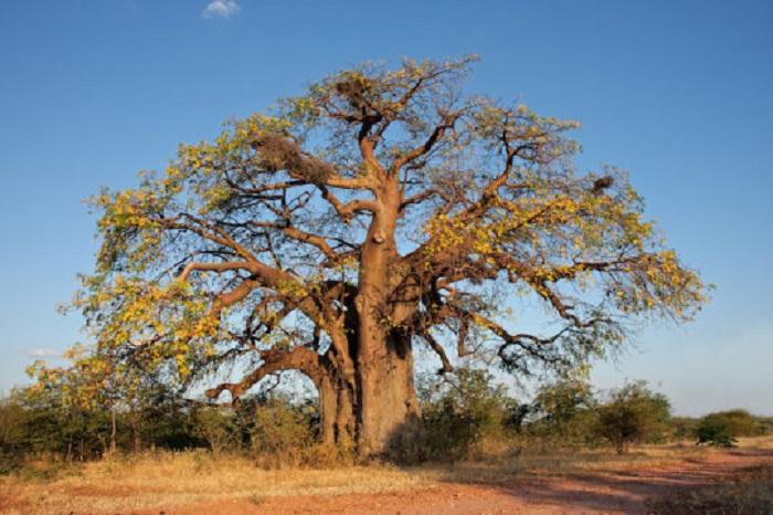 Hayat Ağacı'nın Genetiği