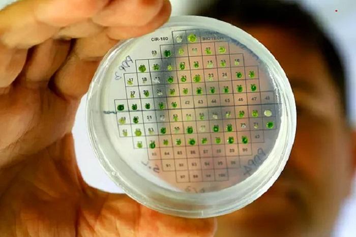 İsrailli Bilim İnsanları Bitkilerden Enerji Ürettiklerini Açıkladı