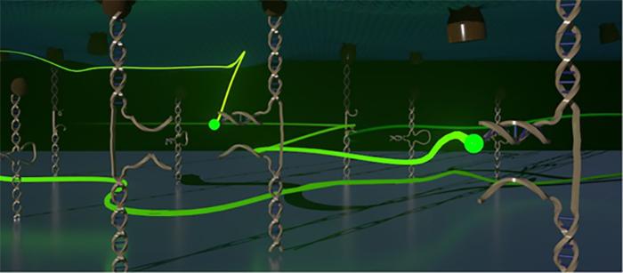 Kimyagerler Hücresel Kuvvetleri Moleküler Ölçekte Görünür Hale Getirdi