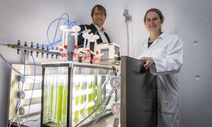 Biyoteknolojide, Siyanobakterilerin 'Yeşil' Katalizör Olduğu Keşfedildi