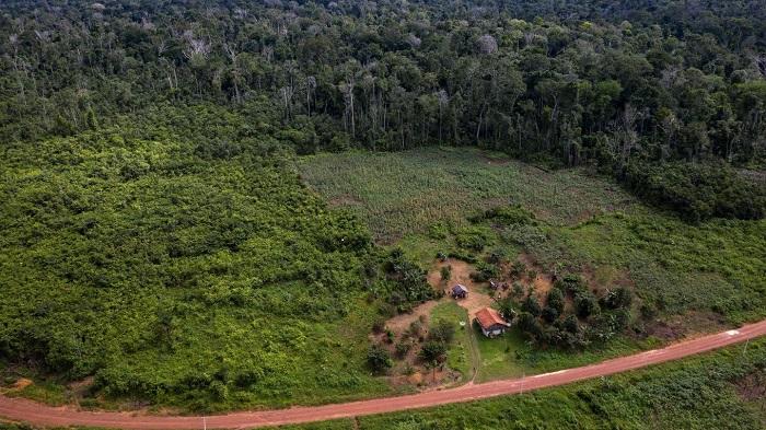 Büyük Umutlara Rağmen, Amazon Ormanlarının İyileştirilmesiyle Emilen Karbon, Ormansızlaştırma Emisyonları Nedeniyle Gölgede Kalıyor