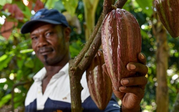 Kakaoda Kadmiyum Seviyesi Azaltılabilir