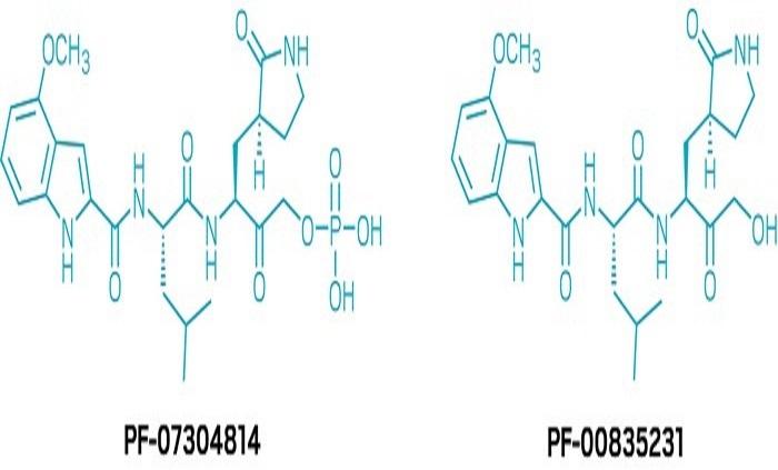 Pfizer'in Yeni COVID-19 Antiviral Çalışmaları Klinik Testlere Başladı
