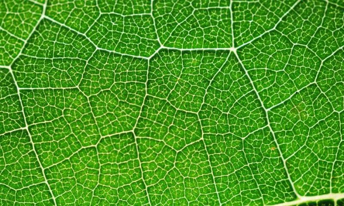 Yakıt Üretiminde Yeni Çığır: Fotosentez Yardımı ile Güneş Enerjisinin Hidrojen Yakıtına Dönüşümü