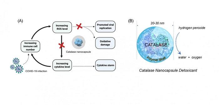 Yaygın Antioksidan Enzimi, COVID-19 için Potansiyel Bir Tedavi Sağlayabilir