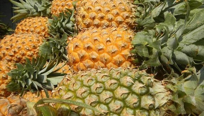 Bilim İnsanları Ananas Atığını Yüksek Değerli Aerojellere Dönüştürüyor