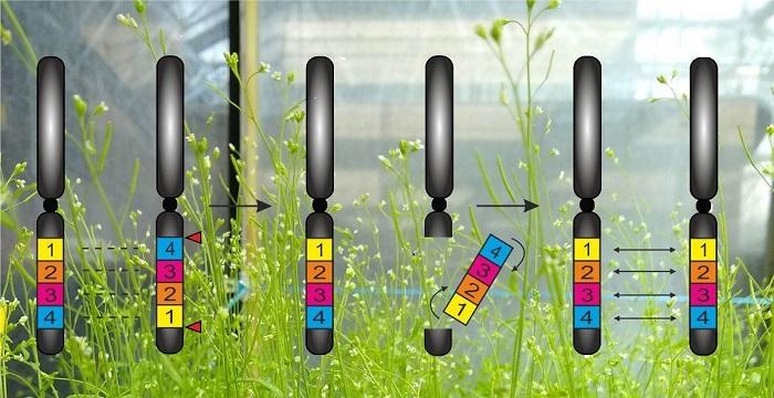 Bitkilerin Kalıtımı Özel Olarak Kontrol Edilebilecek!