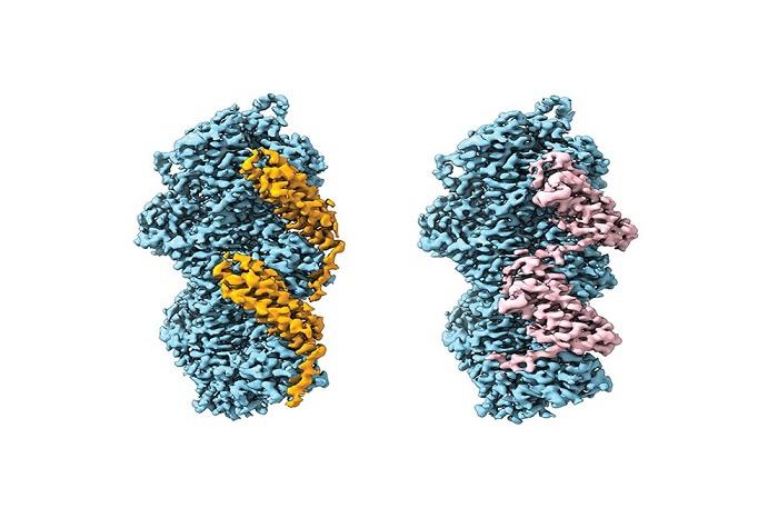 Hücreler Çevreleriyle Etkileşimde Bulunmak için Mekanik Gerginlik Sensörlerini Nasıl Kullanır?