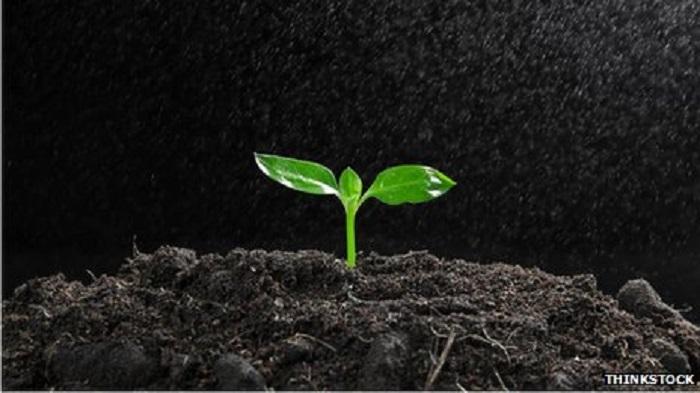 Nitrat Krizinden Fosfat Krizine mi?