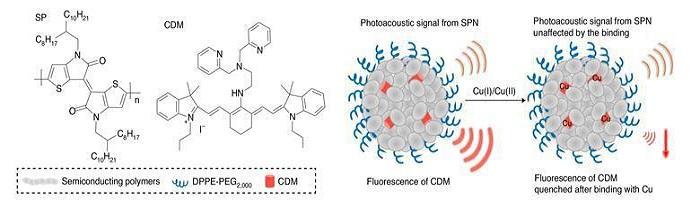 Özel Tasarlanmış Nanopartikül Bakır Elementini Alıkoyarak Saldırgan Meme Kanseri Hücrelerini Aç Bırakabilir