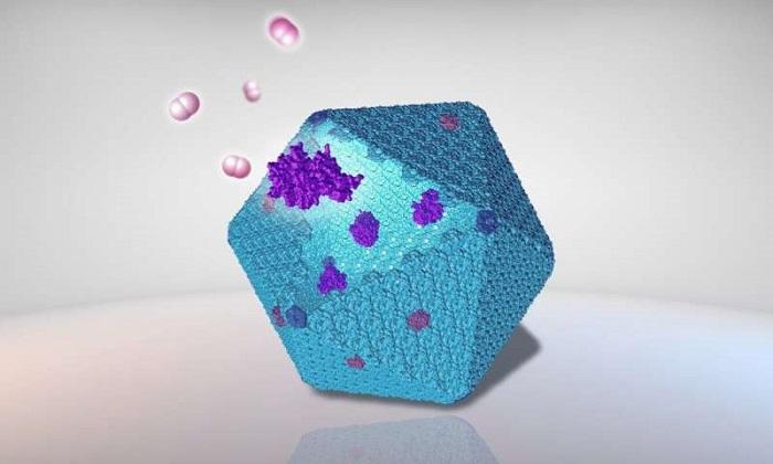 Sürdürülebilir Biyoenerji Üretimini İyileştirmek için Tasarlanan Yeni Protein Nanobiyoreaktörü