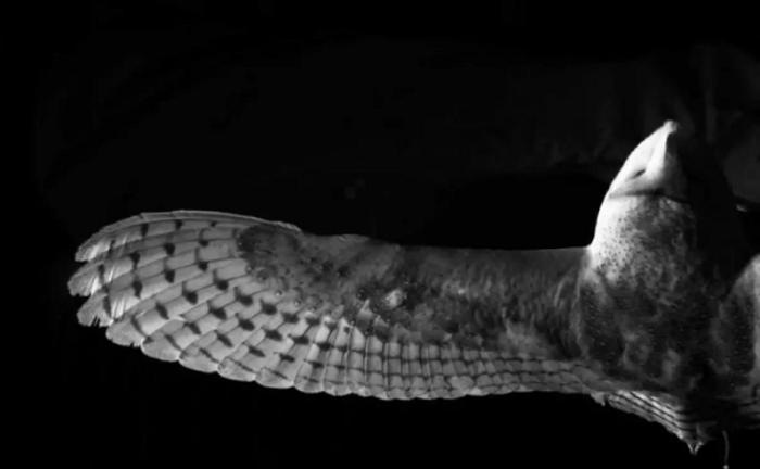 Baykuşların Uçuş Esnasındaki Sessizlikleri Daha Sessiz Uçakların Önünü Açabilir