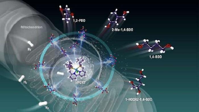 Canlı Hücrelerden Enerji Toplayarak Sıfır Karbonlu Bir Dünyaya