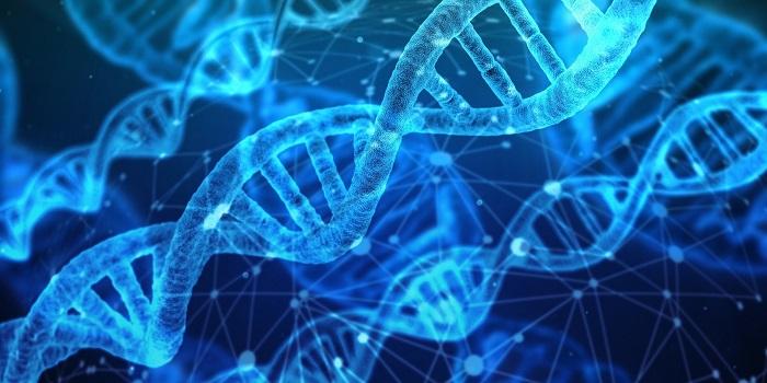 CRISPR, Daha Büyük Gen Düzenlemelerine Olanak Sağlayan Pac-Man ile Buluşuyor