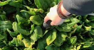 Gıda Kalitesini Analiz Etmek İçin Yeni Yöntem