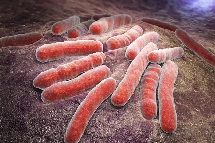 Mycobacterium Tuberculosis'in Enerji Metabolizması Üzerinde Çalışıldı