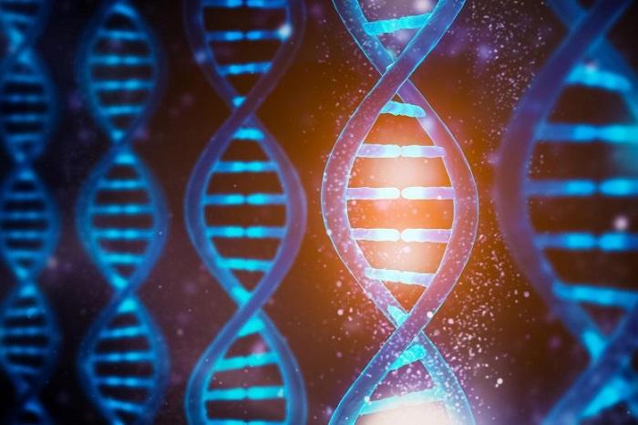 Biyokimyagerler, DNA Fonksiyonlarının Çalışmasını Işık Kullanarak Yönetti!