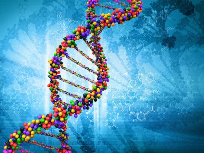 Evrim, İnsanlarda İleri Kanser Gelişme Riskinin Yüksek Olmasından Sorumlu Olabilir