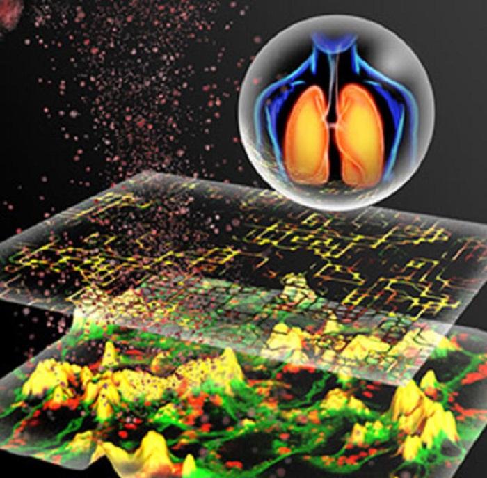 Nanopartiküllerin Toksisitesini Öngören ve Hayvan Deneyleri İçermeyen Yeni Bir Metot Geliştiriliyor
