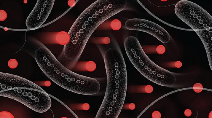 İlaçların İletimi için Manyetik Bakteriler