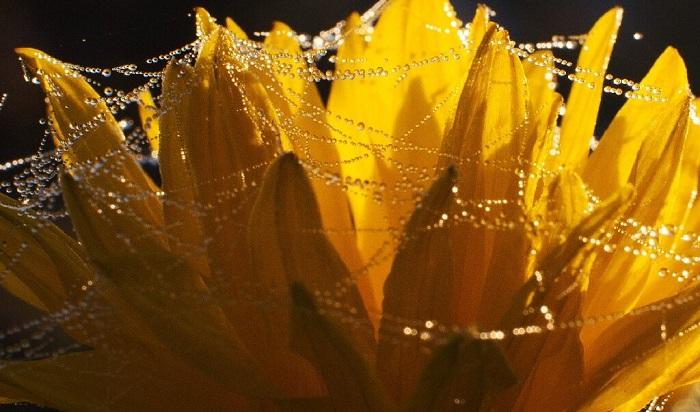 Meyveli Enerjiden Örümcekli Merceklere : 2020'de Doğadan İlham Alan Çözümler