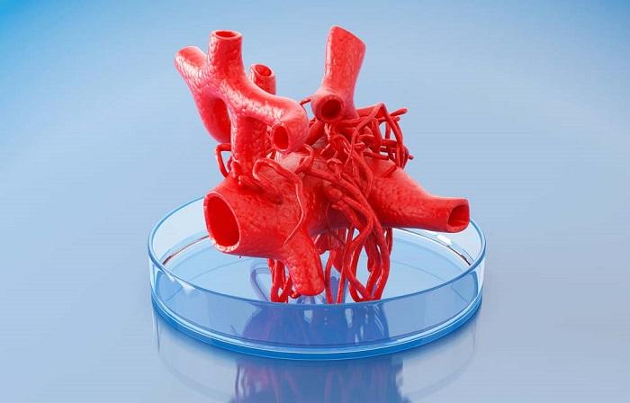 3 Boyutlu Biyo Baskı Sayesinde Gerçek Boyutlu İşleyen Doku ve Organlar Üretilebilecek!