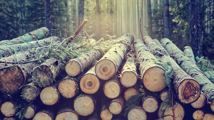 Bilim İnsanları Odundaki Şekerden Sürdürülebilir Polimer Üretiyor