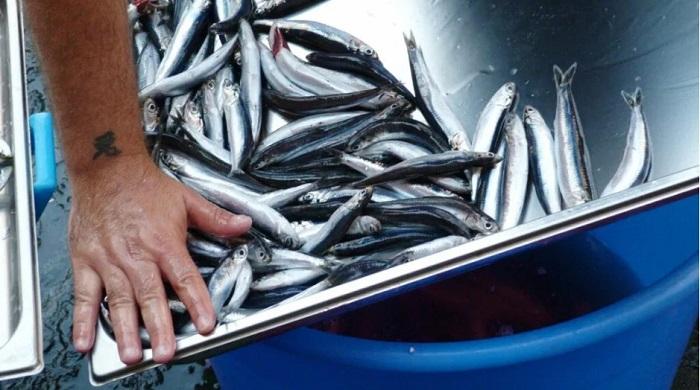 Büyük Tehlike: Mikroplastikler Besin Zincirini Tehdit Ediyor!