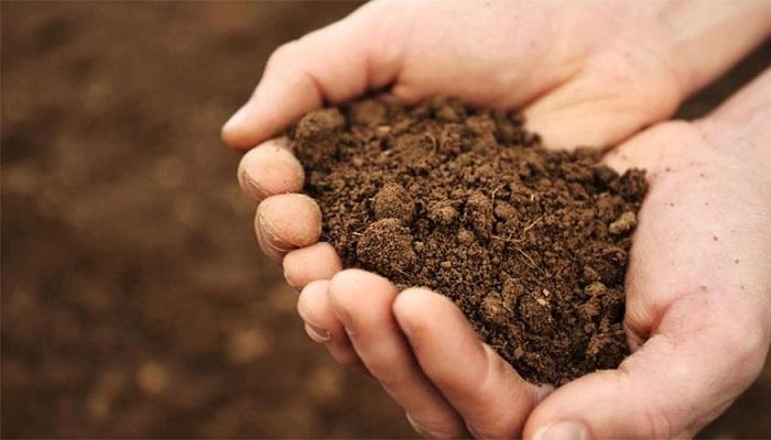 Toprakla İlgili Gerçekler: Topraktaki Mikroplastikler Çevre Kirliliğine Nasıl Katkıda Bulunur?