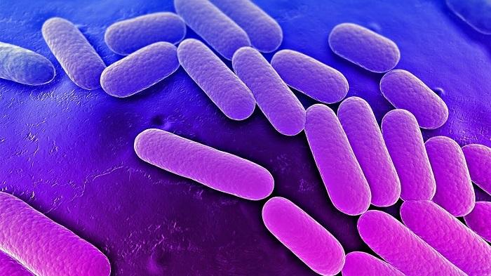 Yeni Antibiyotikler için Umut Olan Yeni Bir Toprak Bakterisi Hormonu Keşfedildi