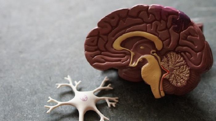 Alzheimer Hastalığını Önleyen İlaç