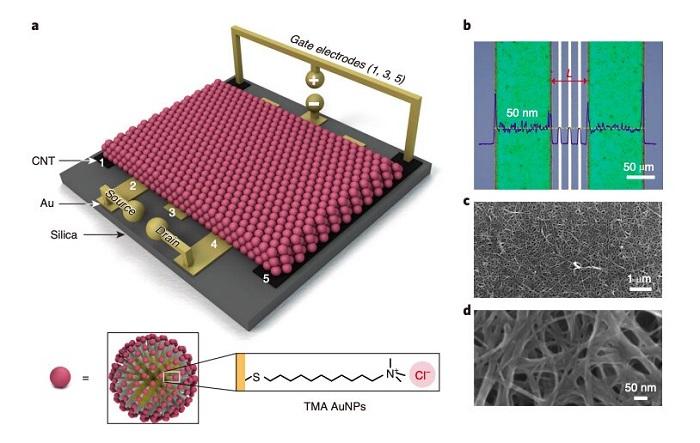 Araştırmacılar Metal Nanopartiküllere ve İyonik Gradyanlara Dayalı Yeni Bir Transistör Oluşturuyor