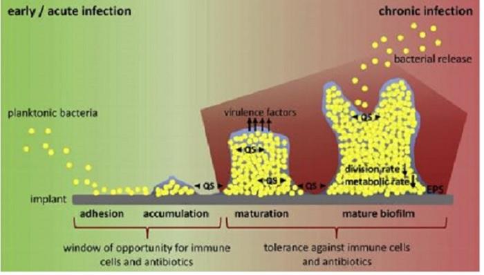 Bor Nitrür Nano-Kaplamalar Bakteriyel Enfeksiyonlara Karşı Antibiyotiklerin Yerini Alıyor