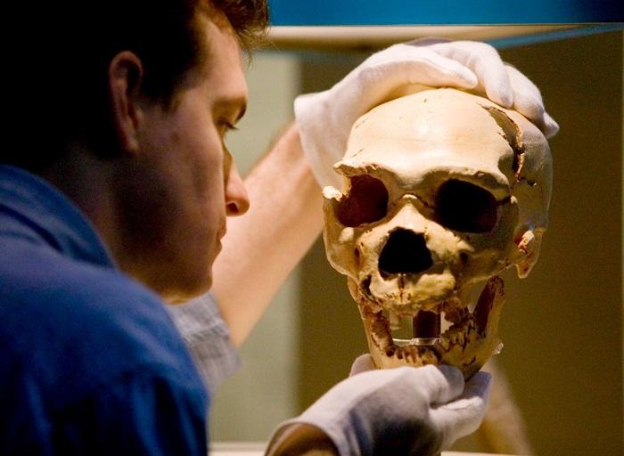 CRISPR ile Neandertal Beynine Benzer Mini-Beyinler Geliştirildi