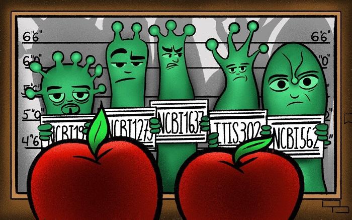 Meyve ve Sebzelerdeki Kimyasalların Varlığını Tespit Eden Teknoloji