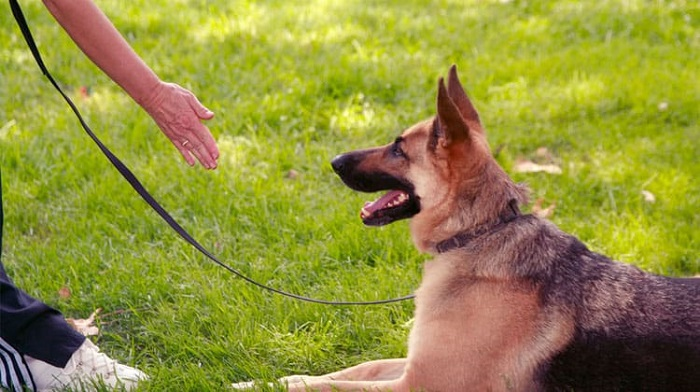 Yapay Zeka Sistemi ile Köpek Eğitimi