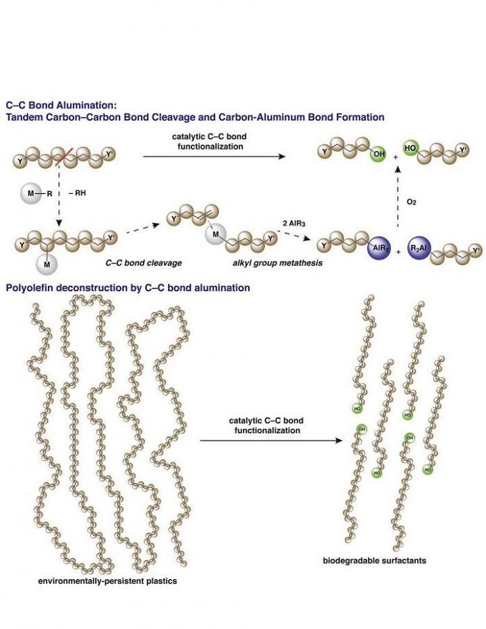 Katalitik Karbon-Karbon Bağ Bölünmesi ve Karbon-Element Bağ Oluşumu Biyobozunur Sürfaktanlar Olarak Poliolefinlere Yeni Hayat Veriyor