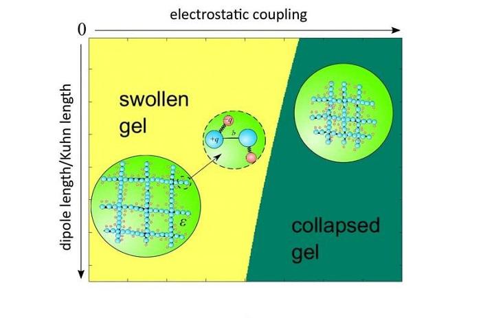 Araştırmacılar Polimer Jelin Mikroskobik Teorisini Geliştirdiler