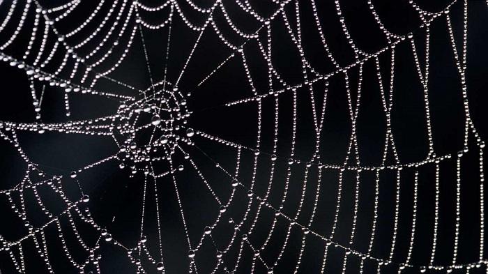 Bilim İnsanları, Örümcek Ağlarındaki Titreşimleri 'Müziğe' Dönüştürdü