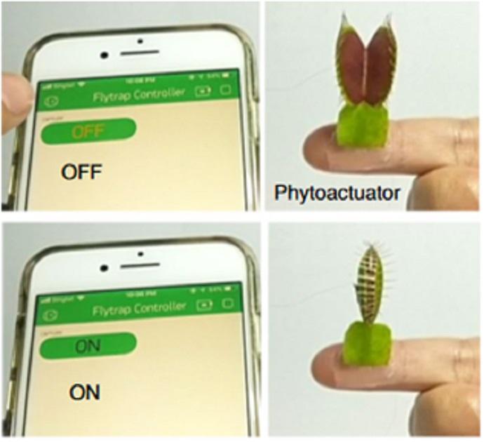 Bitkilerle Sohbet: Venüs Sinekkapan Bitkisi ile İletişim Kuran Bir Cihaz Geliştirildi