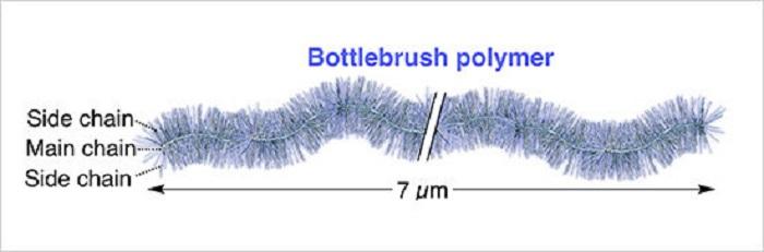 Dünyanın En Uzun Polimer Fırçası