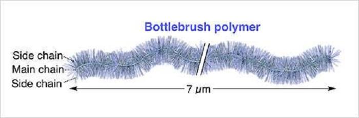 Şimdiye Kadar Sentezlenen Dünyanın En Uzun Şişe Fırçası Polimeri