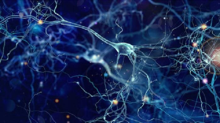 Üç Boyut Baskılı Yeni Biyomalzeme, Canlı Dokuların Özelliklerini Taklit Ediyor