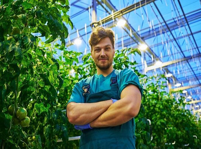 Yapılan Çalışmalar Güneş Panelli Seralarda Bitkilerin İyi Yetiştirilebileceğini Gösteriyor