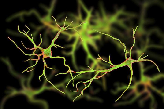 Zombi Genler: Araştırmalar Öldükten Sonra Beyindeki Bazı Genlerin Hala Canlı Olduğunu Gösteriyor