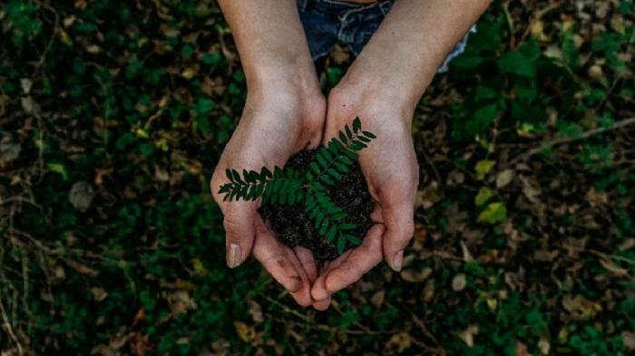 Uluslararası Bir Araştırma Ekibi, Organik Tarım ve Genetik Mühendisliğinin Birleştirilmesini Savunuyor