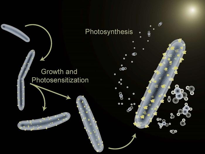 Bakteriler Sürdürülebilir Biyoyakıt Endüstrisi için Umut Vadediyor