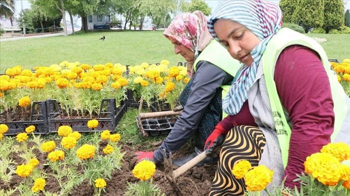 Çöpten Elde Edilen Enerjiyle Isıtılan Serada Yetiştirilen Çiçekler Şehri Süslemeye Başladı