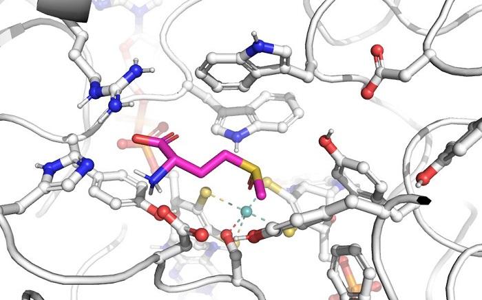 Küçük Aminoasit Farklılıkları, Önemli Ölçüde Farklı Enzimlere Yol Açabilir